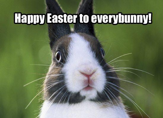 easter-bunny-fun